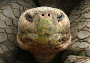 tortoise kiss