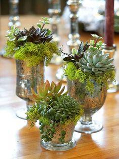 succulentsglass