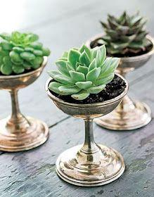succulentsgoblet