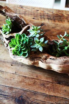 succulentswood